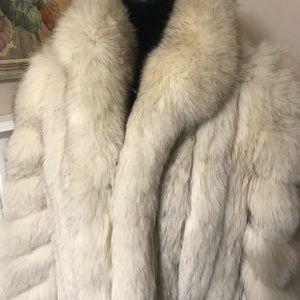SAGA FOX